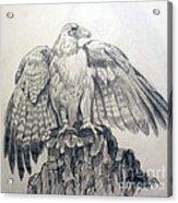 Eagle Sketch Acrylic Print