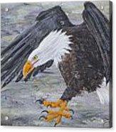 Eagle Study 2 Acrylic Print