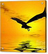 Eagle Sunset Acrylic Print