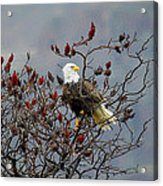 Eagle Tree Acrylic Print