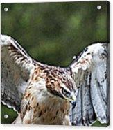 Eagle Wings Acrylic Print