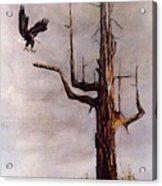 Eagle with Snag Acrylic Print