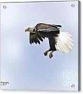 Eaglelanding Approach Acrylic Print