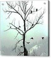 Eagles And Kin Acrylic Print