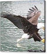 Eagle's Grasp Acrylic Print