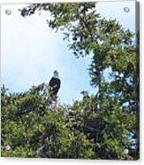 Eagles Nest Acrylic Print