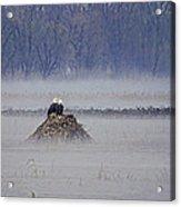 Eagles On Foggy Morning Acrylic Print