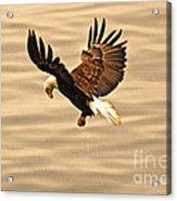 Eagles Pause Acrylic Print