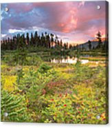 Early Autumn Meadow Sunset At Mt Baker Acrylic Print