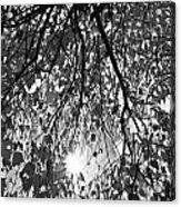Early Autumn Monochrome Acrylic Print