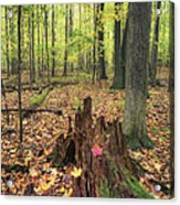 Early Autumn Woods Acrylic Print