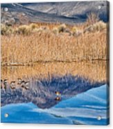 Early Bird Gets The Worm Acrylic Print by Cat Connor