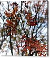 Early Fall Of Rowan Acrylic Print