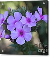 Early Morning Floral Beauty  Acrylic Print