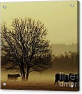 Early Morning Fog 008 Acrylic Print