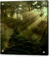 Early Morning Acrylic Print by Katie Wing Vigil
