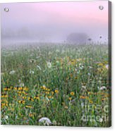Early Morning Meadow Acrylic Print