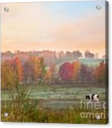 Early Morning Pasture Acrylic Print