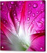 Early Morning Rain Acrylic Print