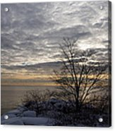 Early Morning Tree Silhouette On Silver Sky Acrylic Print