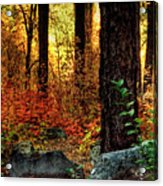 Early Morning Walk Acrylic Print