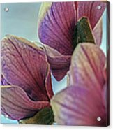 Early Spring Beauty Acrylic Print
