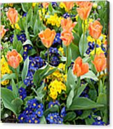 Early Spring Acrylic Print