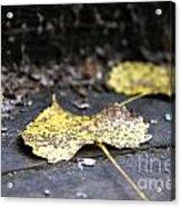 Early Start To Autumn Acrylic Print