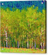 Early Summer Aspen Acrylic Print