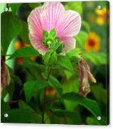 Early Summer Bloom Acrylic Print