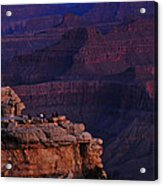 Early To Rise Acrylic Print