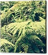 Earthing Dreams Acrylic Print