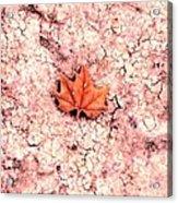 Earthy Acrylic Print
