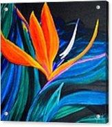 Eastcoast Bird Of Paradise Acrylic Print