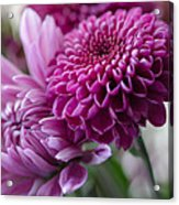 Easter Bouquet Flowers Mums And Dahlia Acrylic Print