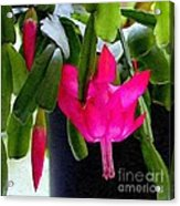 Easter Cactus Digtial Painting Square Acrylic Print