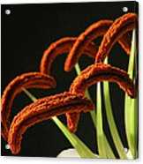 Easter Lily Detail Acrylic Print