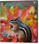 Eastern Chipmunk Acrylic Print