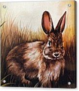 Eastern Cottontail Rabbit Acrylic Print