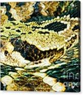 Eastern Diamondback Rattlesnake Acrylic Print