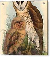 Eastern Grass Owl Acrylic Print