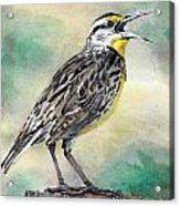 Eastern Meadowlark Acrylic Print