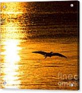 Easy Glider Acrylic Print