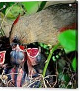 Eat Up Acrylic Print by Frozen in Time Fine Art Photography