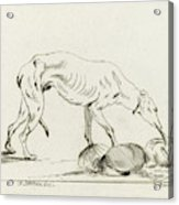 Eating Dog, D. Merrem Acrylic Print