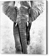 Ebony Ivory African Elephant Acrylic Print