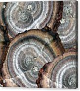Eccentrically Concentric Acrylic Print