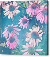 Echinacea Flowers Acrylic Print