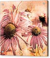 Echinacea Impressions  Acrylic Print
