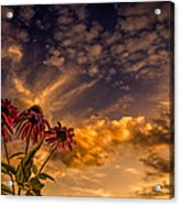 Echinacea Sunset Acrylic Print by Bob Orsillo